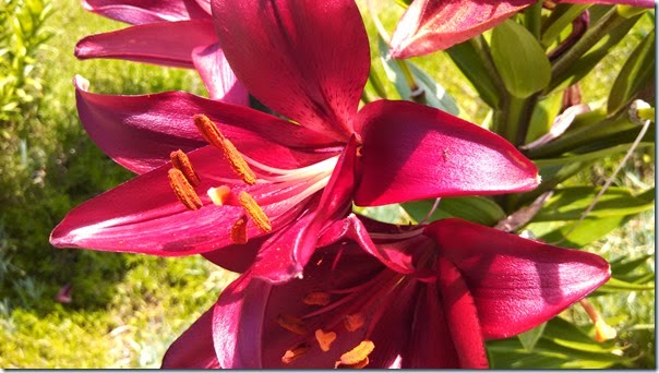 Flowers 05 (5)