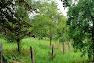Fotowedstrijd hoogstamboomgaarden