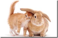 Gatto-coniglio