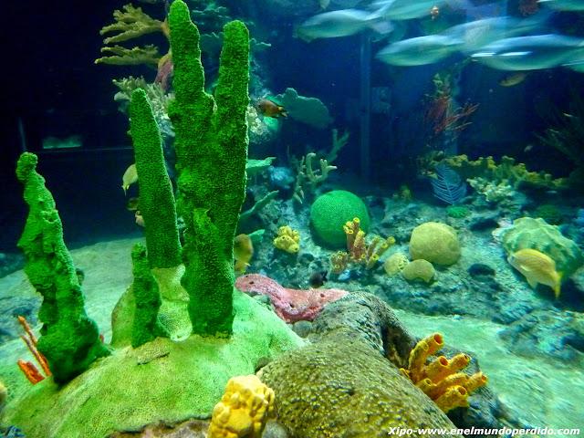 acuario-marino-corales.JPG