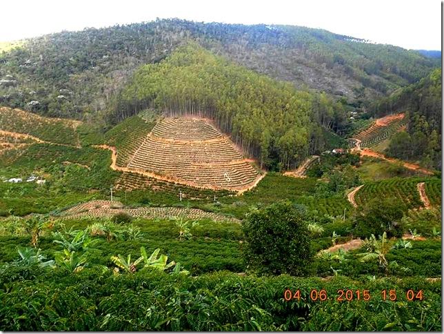 Plantação de café na Vovó