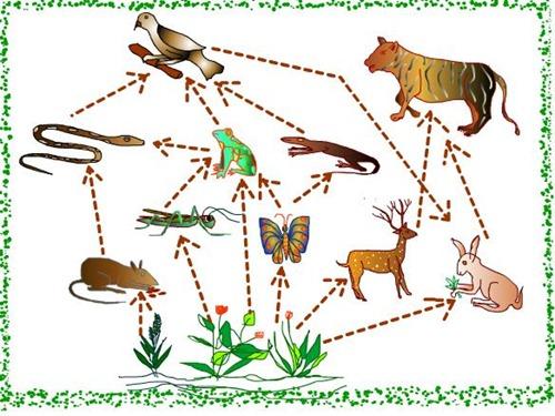 Image Result For Contoh Gambar Mewarnai Kebun Binatang