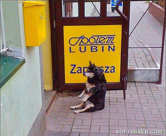 1271362854_sitting-dog-01