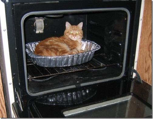 gatos sitios para esconderse (8)