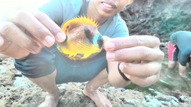 Cari ikan di Wediombo