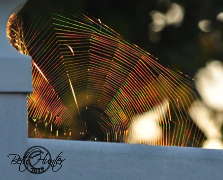 web-refraction