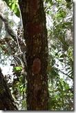 Strange fungus under branches