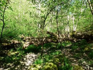 A fallen tree blocks the way