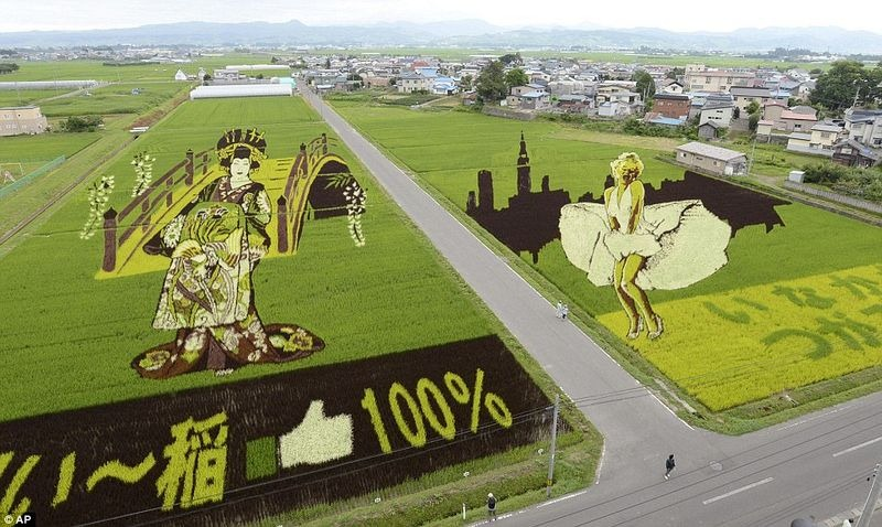 japanese-rice-paddy-art-2