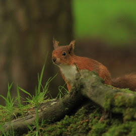 by Chris Mcgurgan - Novices Only Wildlife