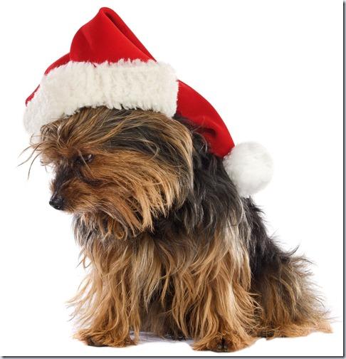 perro navidad (10)
