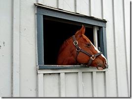 KY horse park 042