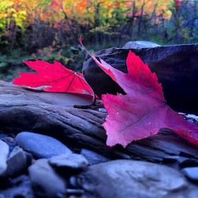 her and i.... by Christopher Gray - Instagram & Mobile iPhone ( red, ohio, leaf, fallcleveland )