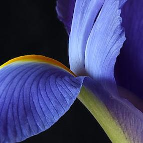 Iris by Michael Schwartz - Nature Up Close Flowers - 2011-2013 (  )