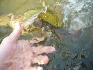 Pouštění ryby.JPG