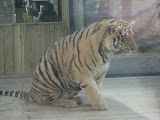 TIGERS Preservation Station - Myrtle Beach - 040510 - 20