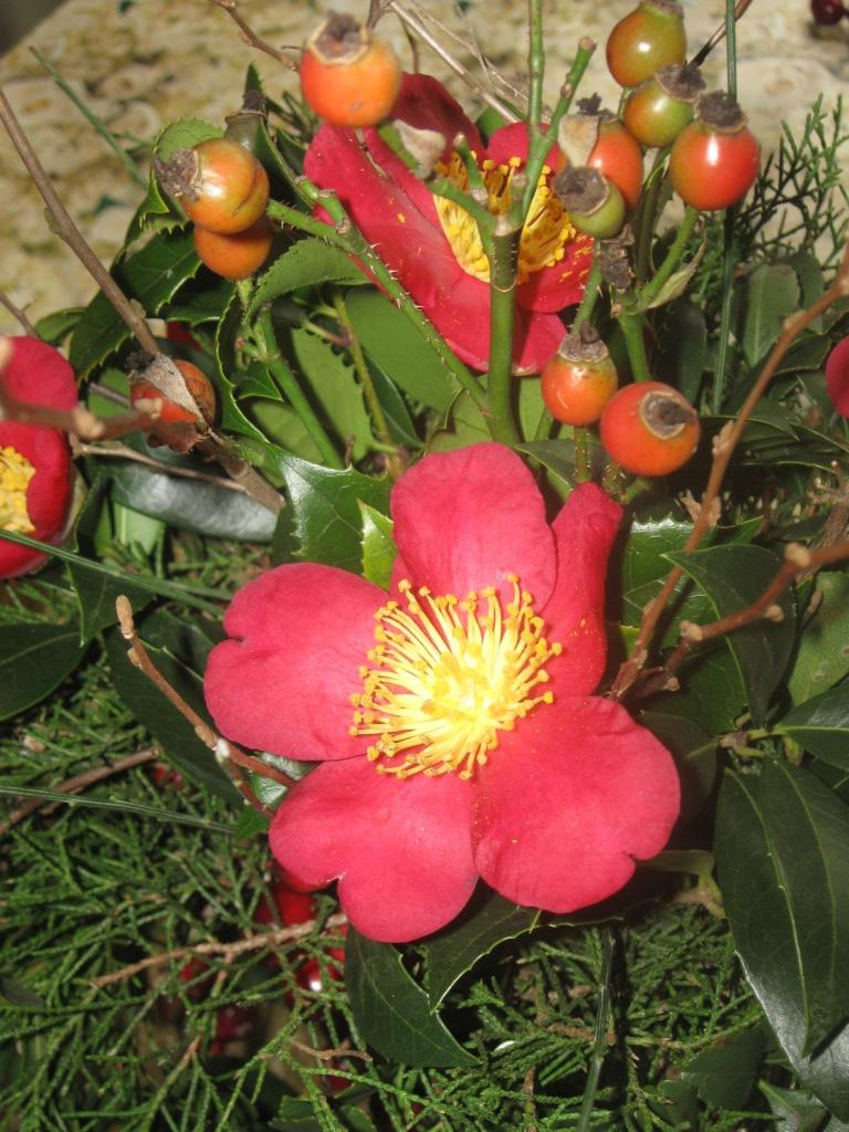 This plant is perfect for December weddings. When the flowers have faded,