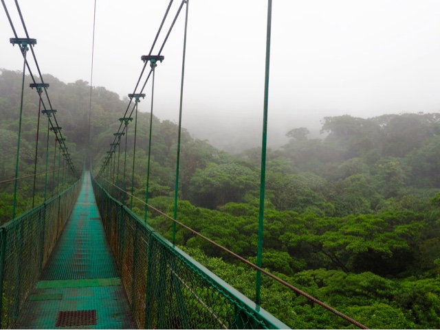 Hanging bridge in the cloud forest canopy of Monteverde, Costa Rica