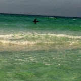 A pelican flying over the water in Destin FL 03192012e