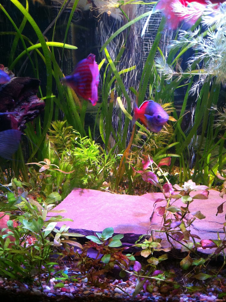 Cell phone pictures of my 75 gallon tank IMAGE_DC346263-031D-4638-B124-C4E7328375FB