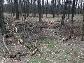 лес37.jpg
