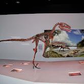 Houston Museum of Natural Science - 116_2670.JPG