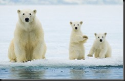 Save the Polar Bear....and fix your Check Engine Light!