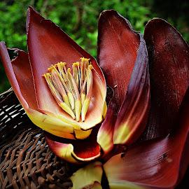 Still life  by Prasanta Das - Food & Drink Ingredients ( banana, still life, flower )