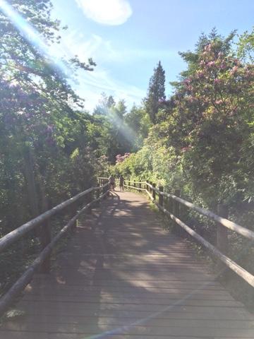 CenterParcs Longleat pathway