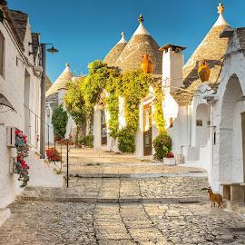 Alberobello by Nick Moulds - City,  Street & Park  Historic Districts ( houses, alberobello, puglia, trulli, italy )