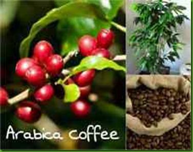 Bellingen Coffee