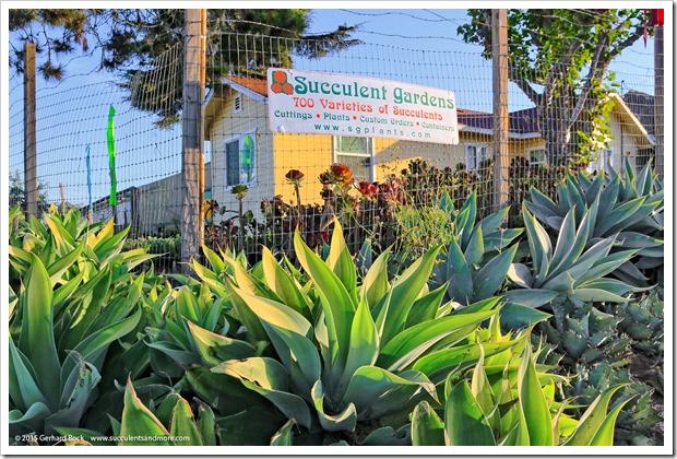 150926_SucculentExtravaganza_024