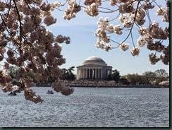 华盛顿特区潮汐池畔的樱花