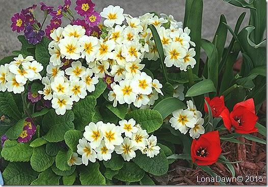 Primrose Spring Bouquet