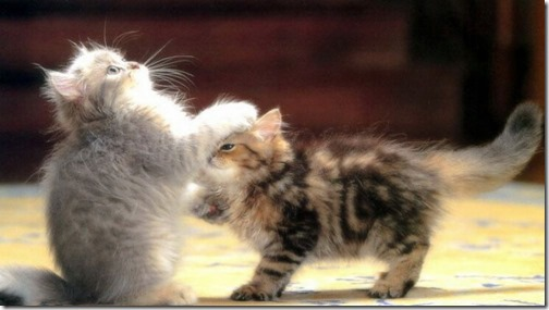 1123cute-cats-wallpapers-background-109