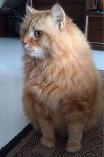 Coco the Little Lion