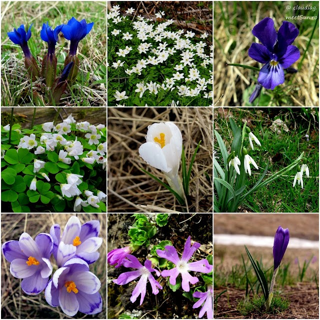 flori-primavara-baiului_r_w.jpg