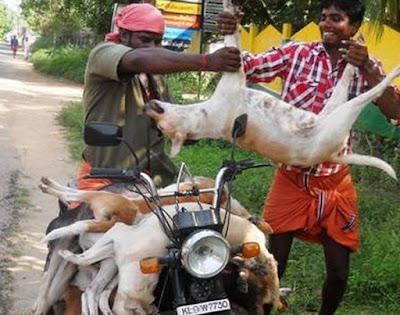 Dog killing