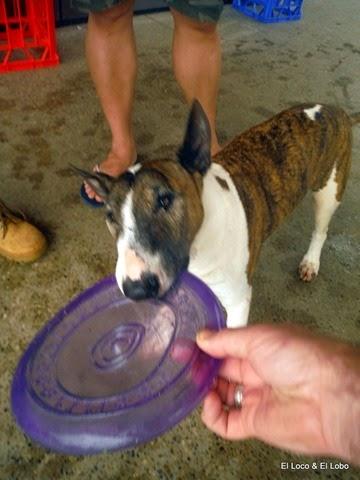 Puck's last frisbee