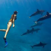 plywanie z delfinami.jpg