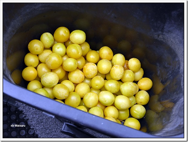 aldermaston plums