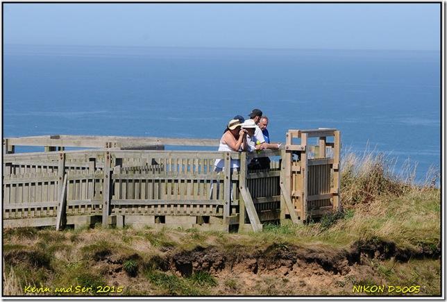 RSPB Bempton Cliffs - August