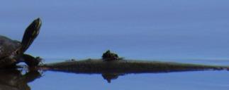 Arkansas River not a Turtle