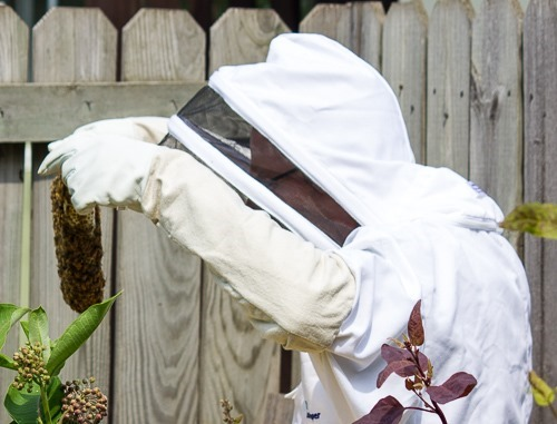 Bee Suit Hive Inspection
