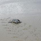 Meeresschildkröte am Strand von Ras Kutani © Foto: Svenja Penzel | Outback Africa Erlebnisreisen