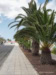 Fuerteventura, Apr. 2017