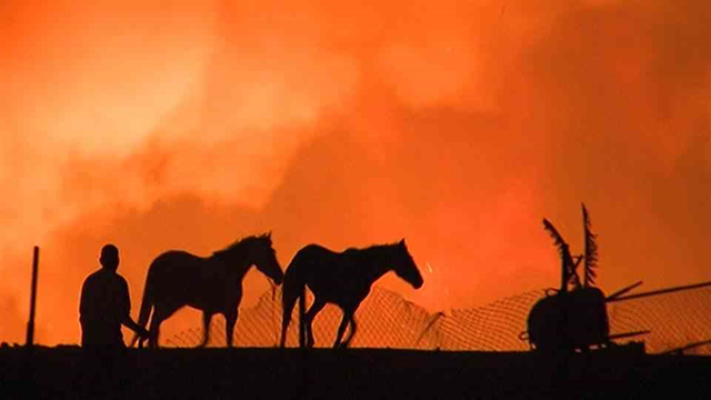 Horses as evacuated as the Prado Dam fire rages in California, 19 April 2015. Photo: NBC News