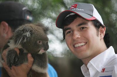 Серхио Перес с коалой в мельбурнском зоопарке перед Гран-при Австралии 2012