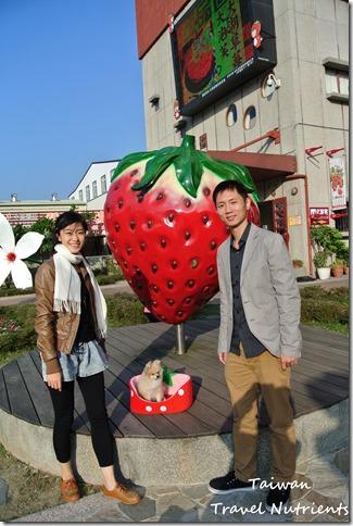 大湖草莓 (8)