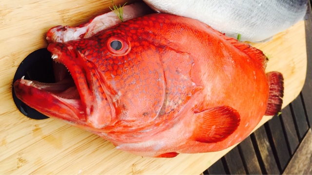 A red grouper waiting to go on the BBQ